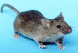P.A.: Mannone (Fns Cisl), la montagna ha partorito il topolino